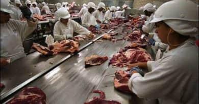 Tizenegy tonna húst foglaltak le Dunakeszin