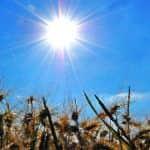 nyári napsütés