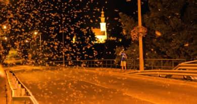 Egy ritka természeti jelenség: újra virágzik a Duna!