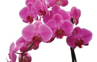 Orchideák: Afrika Csillagai Budapesten