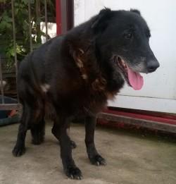 Mackó kutya - Dunakesziről mentették meg-700