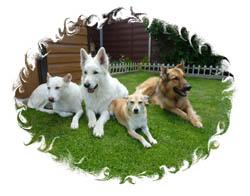 Kutyák a Zöld Menedékben