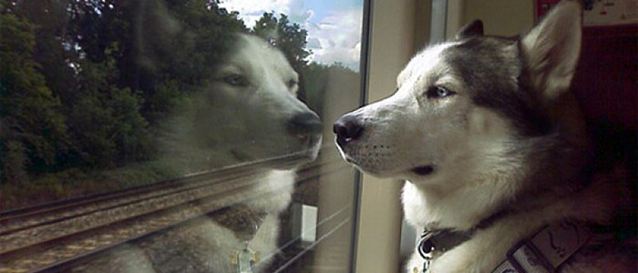 kutya a vonaton az ablakon néz ki-700