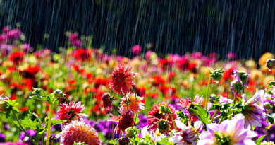 Esős hétre számíthatunk Vácott és környékén is