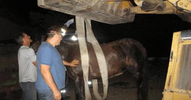 Beszakadt a ló alatt a pótkocsi, jöttek a tűzoltók