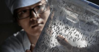 Nem vicces: belehalhatunk-e egy szúnyogcsípésbe?