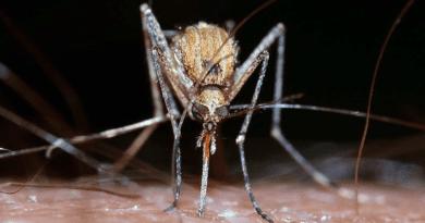 Újabb szúnyogirtást terveznek a jövő héten szerdára