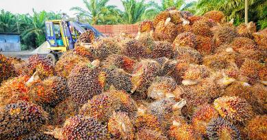 SPAR, Aldi, Lidl: lépések a pálmaolaj-felhasználásban