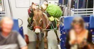 Nem a szobi vonalon utazott a szamár a vonaton