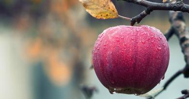 Egekben az alma ára: döbbenet, mennyit kérnek a hazai gyümölcsért a piacokon