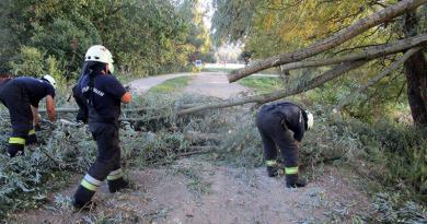 Ágakat tört le, fákat döntött ki a hétfő délutáni szél