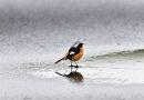 Riasztást adott ki a meteorológiai szolgálat, ónos eső eshet Pest megyében is