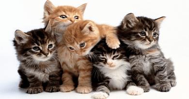 A cica színe árulkodik személyiségéről