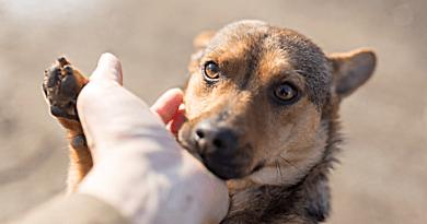 E-mailben is érkezhet a vény: könnyebb lesz kiváltani az állatok gyógyszerét
