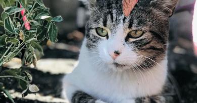 Macskákat mentenek Vácott a Csellengők, akik meghallják a segélykiáltást