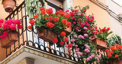 Vásárlással egybekötött virágbemutatót szerveznek Vác főterén