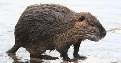 Különös állatot találtak egy dunakeszi társasház bejáratánál
