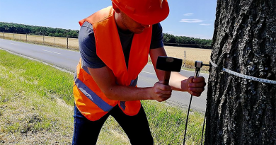 """Digitális """"harkállyal"""" vizsgálja a fákat az utak mentén a Magyar Közút"""