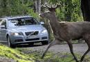 Életveszély az utakon: rengeteg karambolt okoznak ezek az állatok Magyarországon