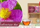 Bodorrózsa tea a teák Királynője
