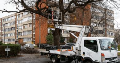 Fa visszavágások: több éves probléma megoldásába kezdtek
