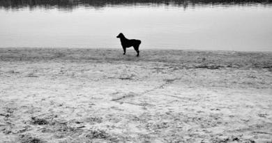 A Duna csak higított dózisban kapta meg a szennyezést