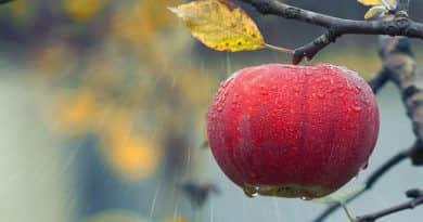 Itt a harmadik csapás a magyar gyümölcsnek