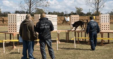 A váci börtön Zserbó kutyusa már tanulja a kábítószerkeresést
