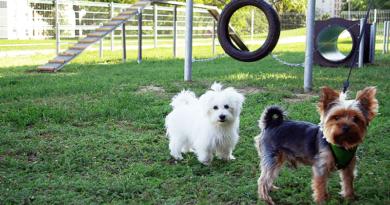 A vita tárgya: kutyák, gazdák, parkok és szabályok