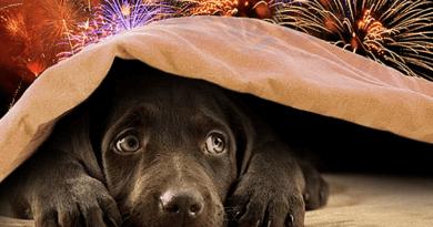 Idén tilos a tűzijáték szilveszterkor, csak kertes házak udvarán lehet kétfélét működtetni